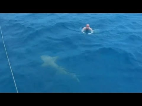 Close call with shark caught on camera