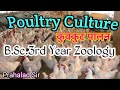 Poultry Culture// B.Sc..3rd Year. Zoology .1st Paper// Lecture By- Prahlad Sir