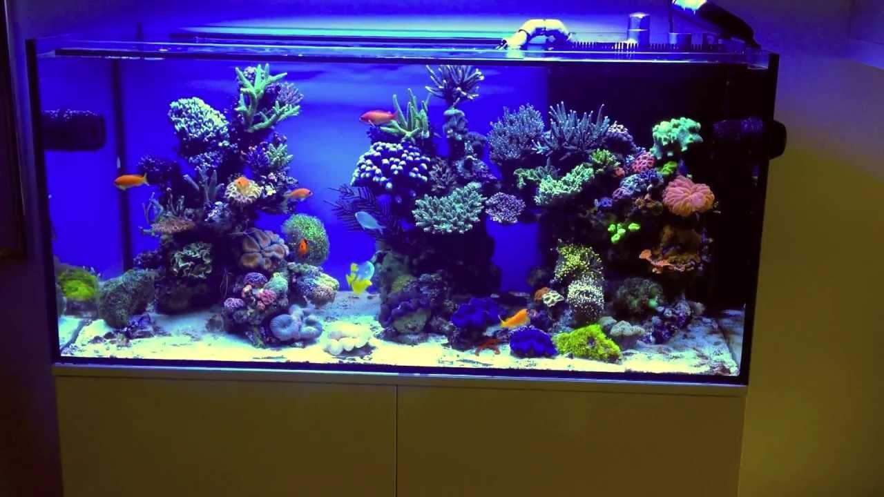 How To Make Saltwater Aquarium At Home