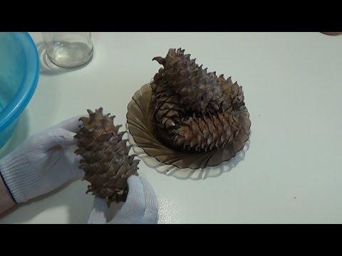 Кедровый орех – его плюсы и минусы