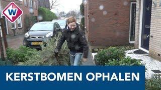 Scouting Honselersdijk haalt 137 kerstbomen op voor zomerkamp - OMROEP WEST