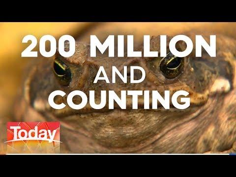 Cane Toad Conundrum | TODAY Show Australia