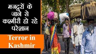 Kashmir में हो सकती है Labour Shortage । J&K में आतंक पर तगड़ा प्रहार, अब तक 15 दहशतगर्द ढेर