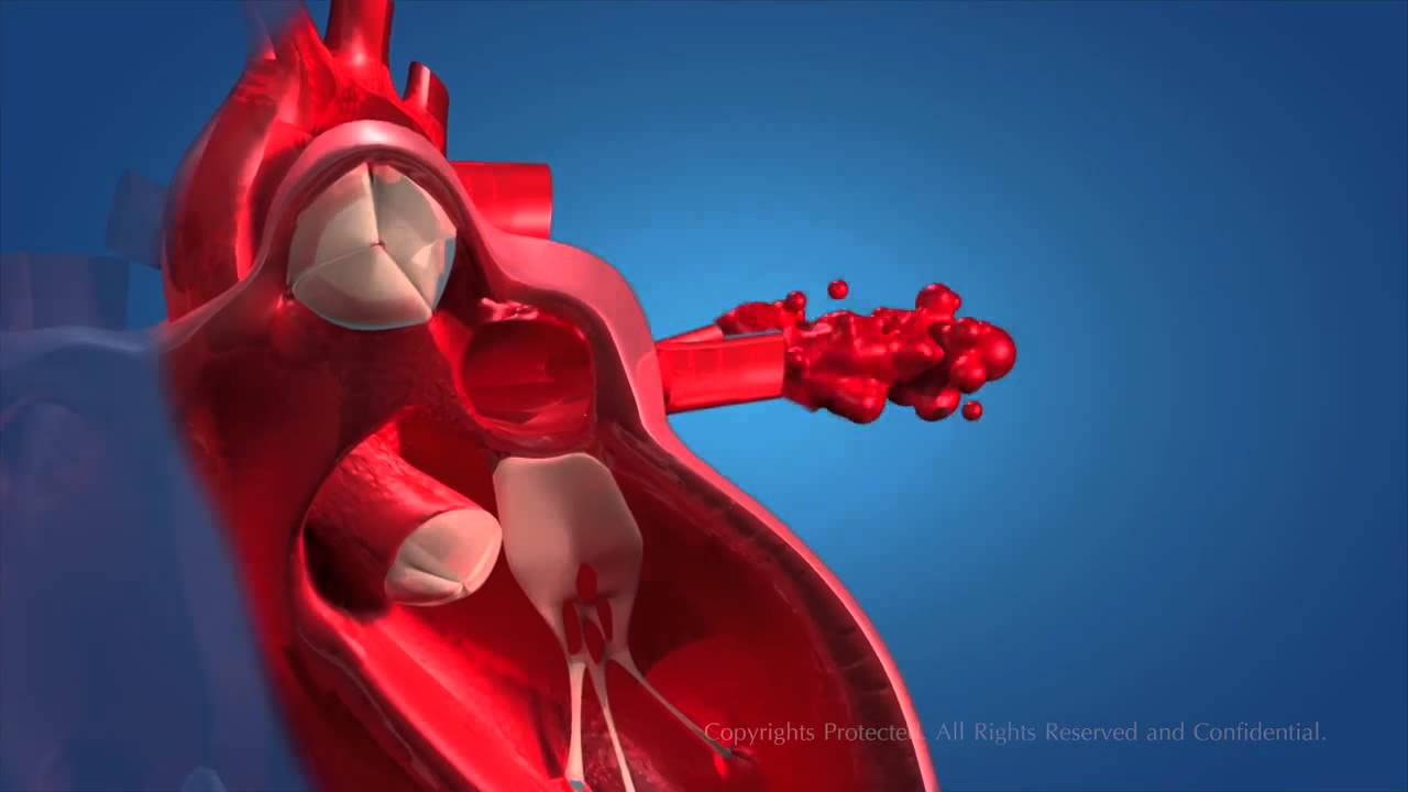 Human Circulatory System Youtube