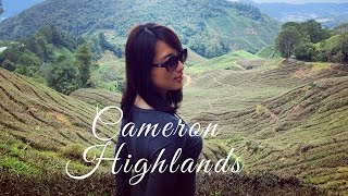 Explore Mossy Forest & BOH Tea Plantation in Cameron Highlands 金馬倫高原 │ Malaysia