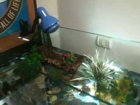 Acquario x tartaughe da 200 litri youtube for Tartarughe per acquario