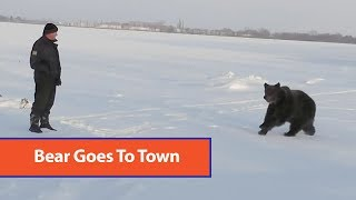 Bear Hangs Out With Locals