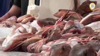 visserijweekend Ons belang Elburg