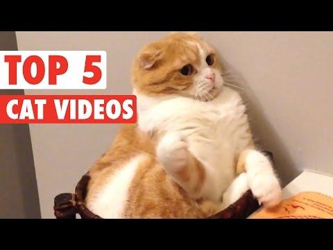 Top 5 Cat Videos || Feb 19 2016