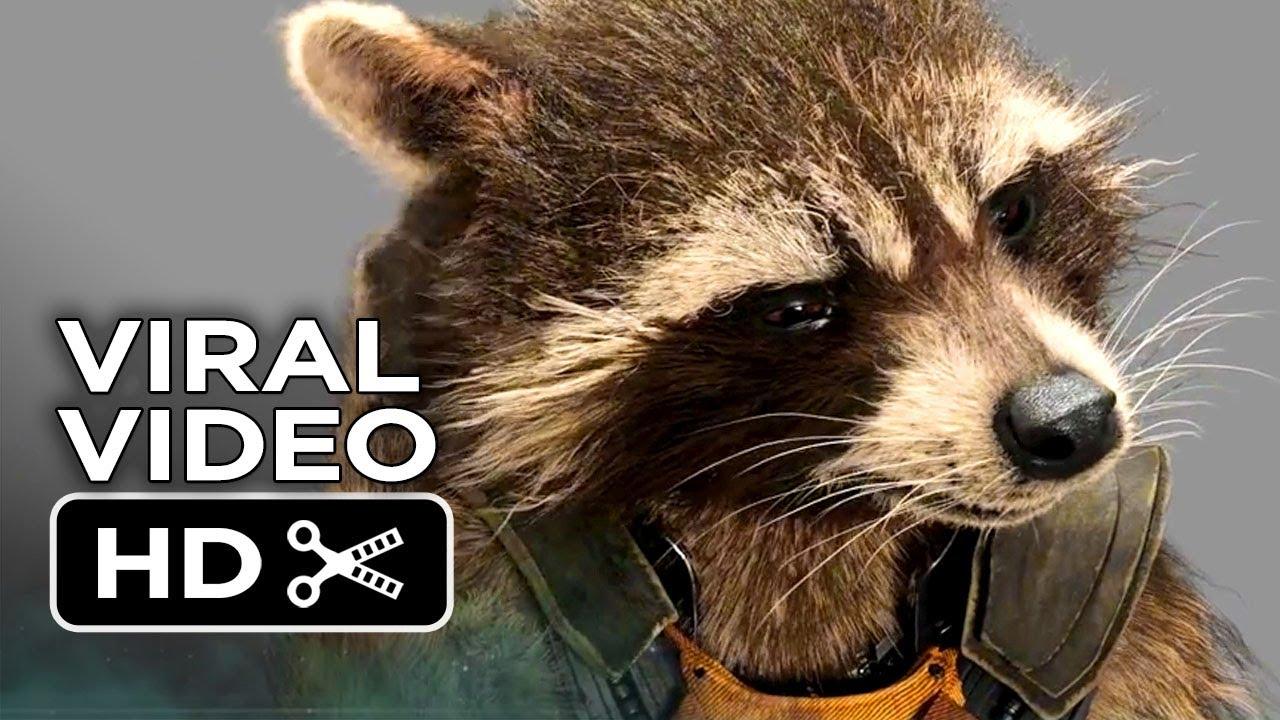 Cute Furry Wallpaper Guardians Of The Galaxy Viral Video Rocket Raccoon 2014