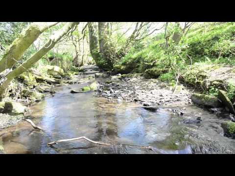 Relax by a stream for 2 hours