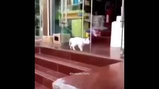 Plug Walk Cat Meme