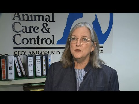 PIT BULL ATTACK: Animal Care and Control Department Director Virginia Donahue Talks About Dog Attack