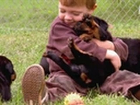 Wrestlin' Rottweiler Pups | Too Cute Travel Video