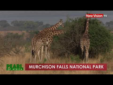 Pearl of Africa: Murchison Falls National Park