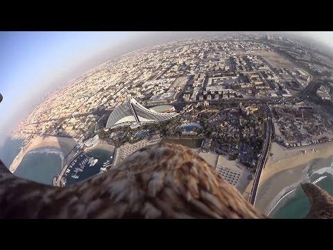 Freedom Eagle Dubai - Sony