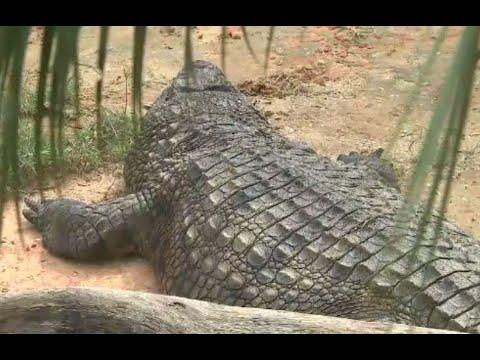 Chris Proctor - Genius Breaks Into Gator Farm, Gets Attacked