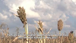 EL Niño in Lesotho: when the planting gets tough