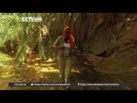 Desert Series: Terjit Oasis - A miraculous desert wonder