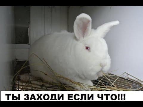 Клетка для кроликов своими руками,пошаговая постройка