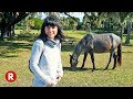Cumberland Island Wild Horses // Unique Things to do in Georgia, USA!