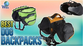 10 Best Dog Backpacks 2018