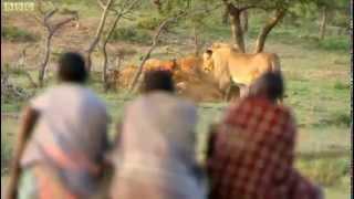 ライオンの獲物をちょっとだけもらうマサイ族
