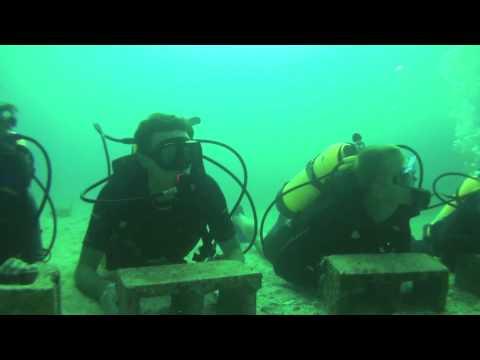 Week 01, 2010 - Ocean Explorers - Shark Dive