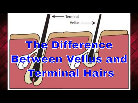 The Difference Between Vellus and Terminal Hairs | #TheBeardnecessities | Ep 33