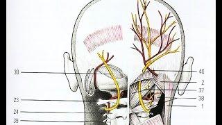 видео Невралгия затылочного нерва: симптомы и лечение