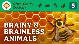 Brainy & Brainless Animals: Crash Course Zoology #5