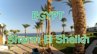 Отдых В Египте Шарм Эль Шейх Красное Море