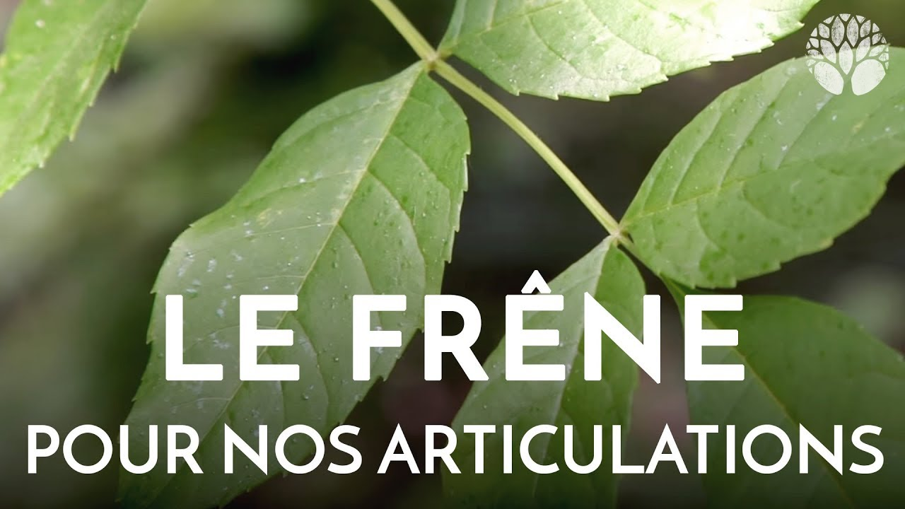 Le frêne, pour nos articulations