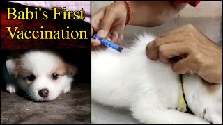 Babi's First Vaccination   My Dog First Vaccine   German Spitz Puppy Cute Funny Videos