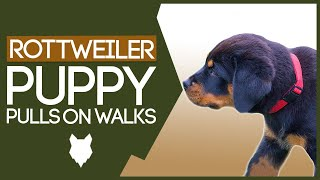 How To STOP Your ROTTWEILER Pulling On Walks! Perfect Heel Training!