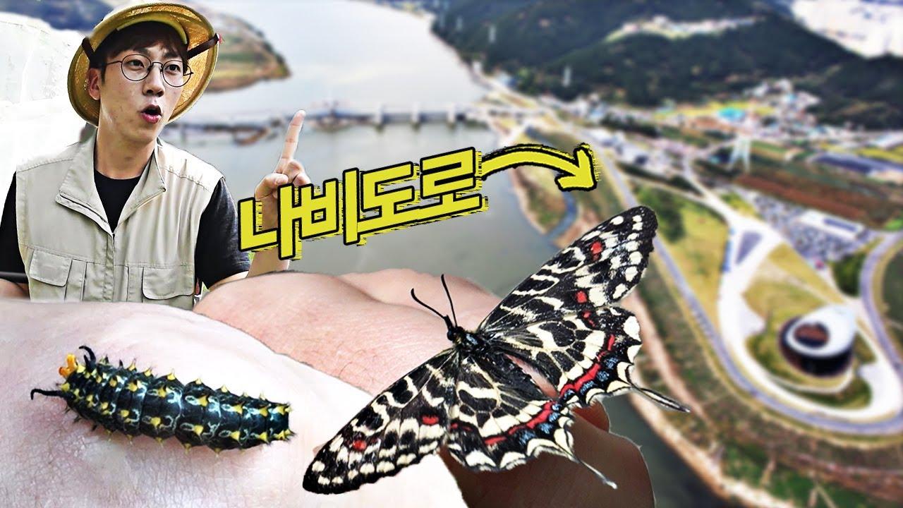나비를 위한 길이 있다? 강정고령보 나비길 탐방기!