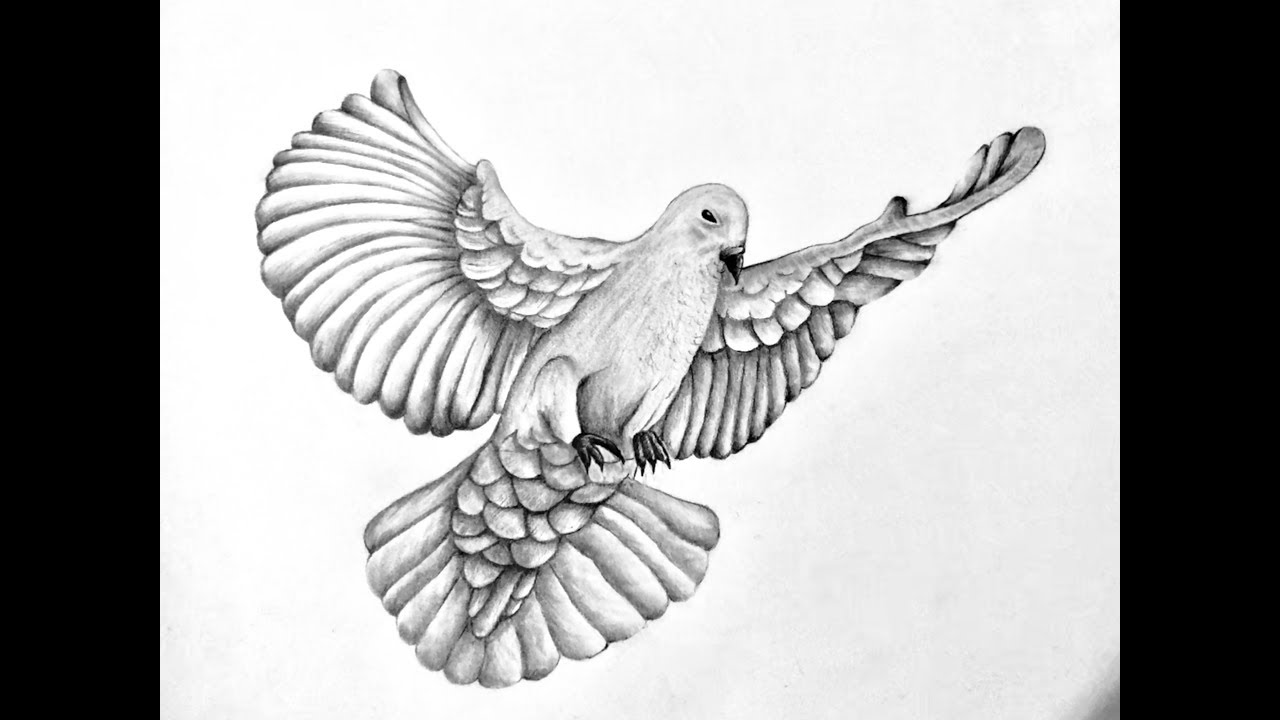 It is a photo of Adaptable Realistic Dove Drawing