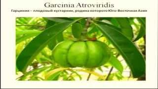 Гарциния Камбоджийская для похудения. Часть 1.