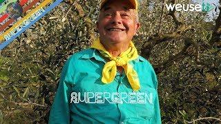 Antico trucco per aumentare la produzione dell'olivo con Fernando, esperto rabdomante e apicoltore
