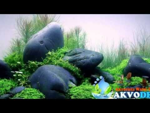 Jual Aquascape Air Tawar - YouTube