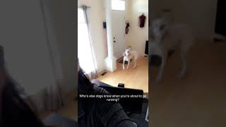 Funny dog knows it's time to go running! Demanding much?