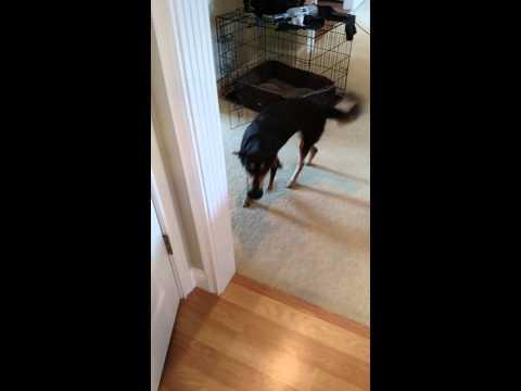 Can I Give My Dog Trazodone