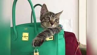 에르메스가방과 귀여운 고양이들/에르메스샵에르메스버킨백/…