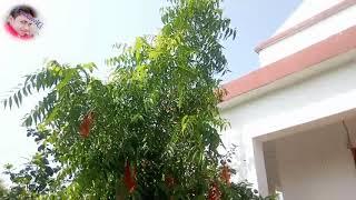 New 2019 Bhojpuri bhagti song khesari lal yadav