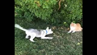 Cute is Not Enough Funny Cats and Dogs Compilation 61