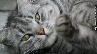 Owning A Cat Can Tell Others A LOT About You - Newsy