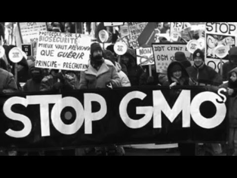 AGRI 482 Labeling GMOs