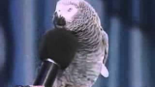 Her sesi cikaran papagan