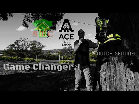 NEW CLIMBING SYSTEM..!! ( Notch Harness In Action Review ) PLUS SRS And MRS Tree Dismantle BY STC