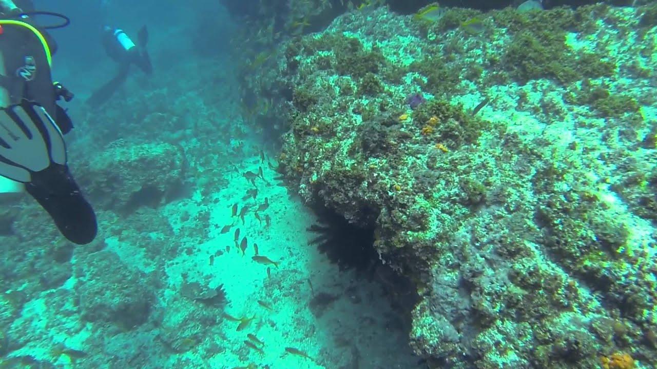 Byron bay 24 dec 2014 youtube - Dive byron bay ...